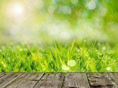 Como preparar el suelo para plantar cesped