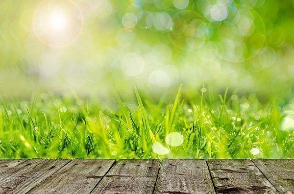 C mo preparar el suelo para plantar c sped mr c sped for Como quitar la mala hierba del jardin