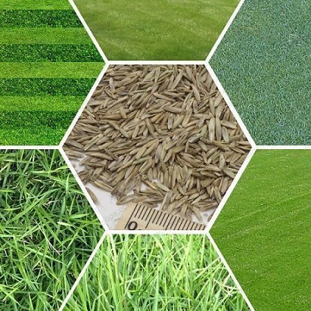 manual grass cutter in sri lanka