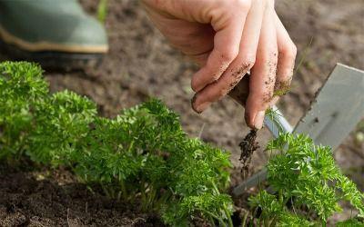 quitar malas hierbas para sembrar cesped