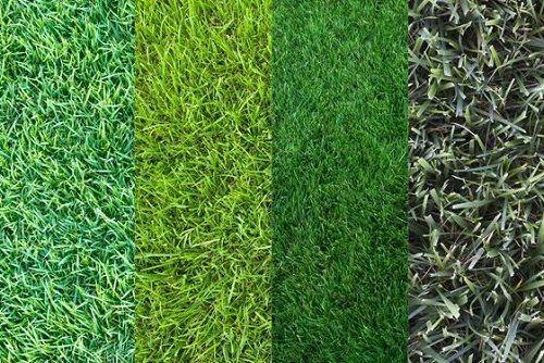 Tipos de c sped cu ntos hay cu l deber a elegir gu a for Tipos de cesped natural para jardin